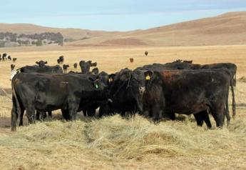 Branded programs draw ranchers closer to consumers.