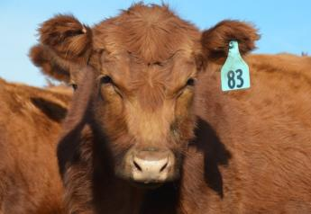 Tips to get heifers ready.