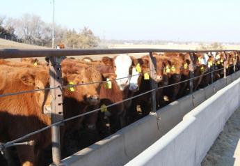 All classes of cattle traded higher.