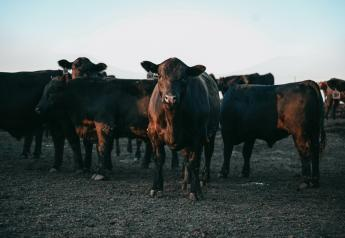 Cash fed cattle prices increased for the fifth consecutive week.
