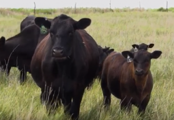 When nationwide audits began showing the wide gap between the average mix of beef quality and what the consumer wanted, ranchers began responding.