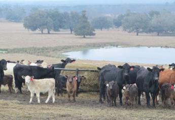 Cattlemen support modernizing NEPA