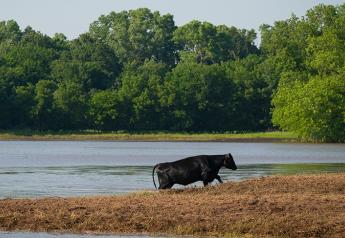 The immediate danger of livestock lost to floodwaters may be receding, but post-flood diseases may now be an issue for cattle operations.