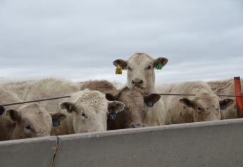 Cattle markets began November pushing higher.
