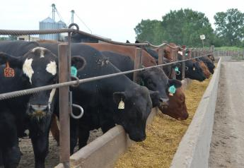 USDA's March 1 cattle on feed report estimated 1% more cattle in feedlots than the same period last year.
