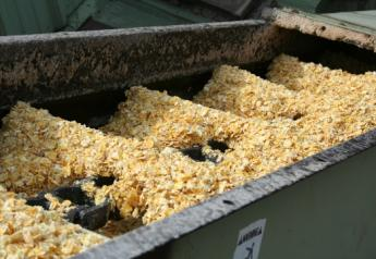 Aflatoxin, produced by Aspergillus fungus, is the most common mycotoxin in corn and other grains used in cattle feed.