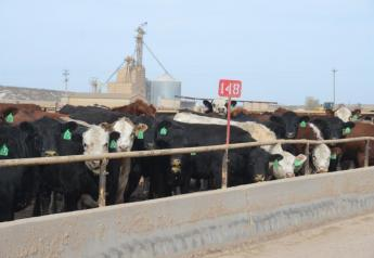 Feedlot show lists remain large