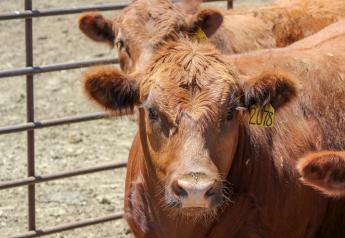 July cattle feedlot placements were 11% higher