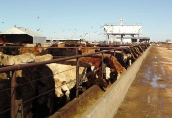 The President made a broad statement Tuesday about cattle imports, asking USDA Secretary Sonny Perdue to look into terminating bringing in cattle from other countries, a possible decision that could come with consequences.