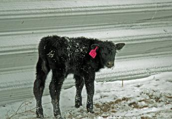 In cold and windy situations, protection for livestock will reduce cold stress and aid in calving success and energy requirements.