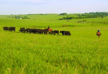 Contentious battles continue over the beef industry's self-help program