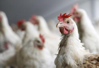 Walmart, America's largest retail grocer, has filed suit against various U.S. poultry companies alleging a conspiracy to inflate chicken prices.
