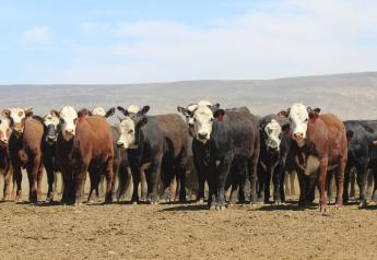 Cattle prices turned higher