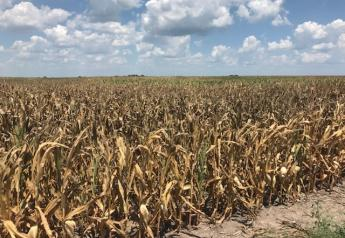 Drought is taking a toll on crops in Missouri. This photo was taken in July 2018 in Ray County, Missouri. A new USDA crop progress report comes out this afternoon, but as of last week 45% of Missouri's corn was poor to very poor.