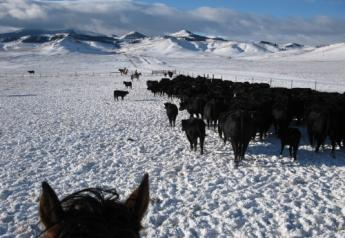 Extreme weather fluctuations put extra stress on calf immune systems.