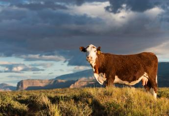 The long-range strategic planning process for beef is underway.