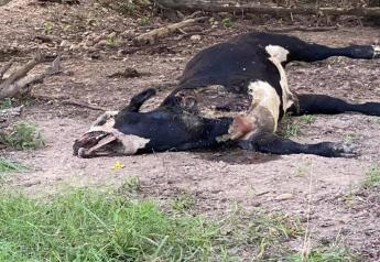 One of the animals killed had a front leg dismembered.