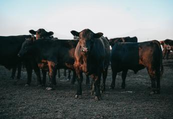 The industry's success relies on quality beef.