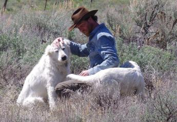 Blaine County, Idaho, sheep rancher Cory Peavey and his dogs.