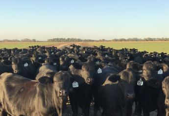 Santa Rosa Ranch is the largest registered Brangus/Ultrablack operation in the U.S.