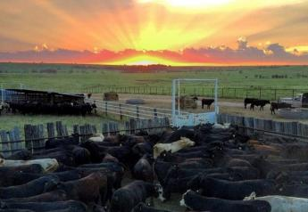 USDA's mid-year cattle inventory shows little change