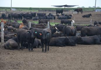 Cattle feeders saw average losses exceed triple digits last week.