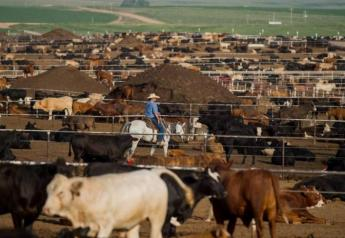 Cattle on Feed report neutral