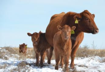Ranchers in many regions are heading into winter with limited forage supplies.