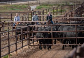 Moving bulls to the sorting pen behind the sale ring at Gardiner Angus Ranch's 40th Production Sale are Peyton Redfearn, a senior at Texas A&M, left; Drew Sherrerd, Wayne, Okla., and Adelaide Kline, a senior at Oklahoma State, right.