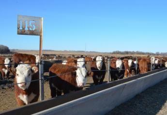 Cash fed cattle traded $2 to $4 higher Wednesday.