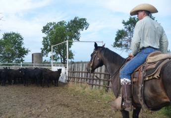BT_Cattle_Cowboy_Horse_Work