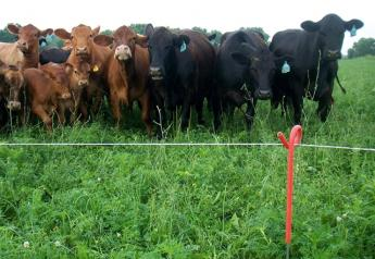 BT_Cattle_Electric_Fence