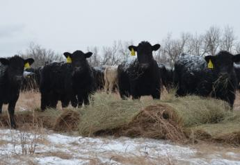 BT_Cattle_Winter_Feeding