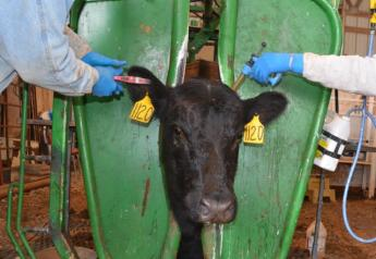 BT_Cow_Vaccinate_Tagging