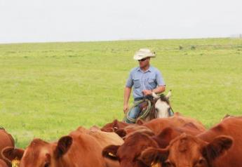 BT_Cowboy_Cows