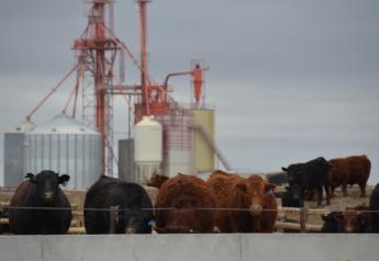 BT_Feedlot_Cattle_Feed_Mill