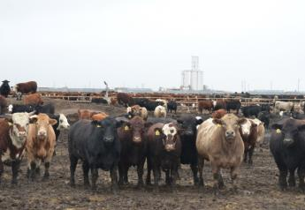 BT_Feedlot_Cattle_Mill