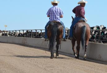 BT_Feedlot_Cowboys