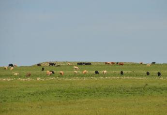 BT_Flinthills_Stocker_Cattle
