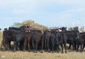 BT_Hay_Bunk_Cattle