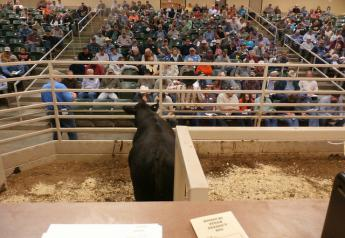 BT_Missouri_Bull_Sale_Auction_Ring