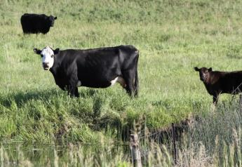BT_Nebraska_Cow_Calf