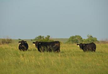 BT_Stocker_Cattle_Steers