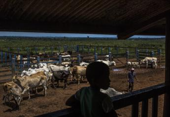 A boy watches a landless occupant farmer gather cattle at Agropecuária Santa Bárbara Xinguara SA Maria Bonita farm.