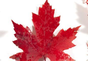 CANADA-maplesleaves