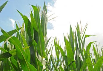 Using genetic engineering, Benson Hill has developed a trait that allows corn plants to absorb more carbon, which translates into more grain.