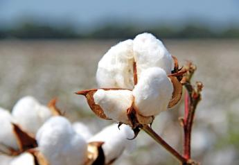 A cotton boll from Red Land Cotton.