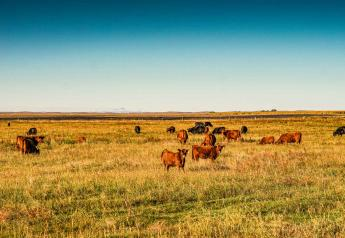 Technology may soon be used for grazing decisions
