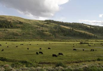 Wyoming meadow