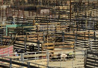 Ty Krebs, owner of Krebs Ranch in Gordon, Nebraska, works to set up his yard pen for cattle he is showing during the National Western Stock Show on January 8, 2019 in Denver, Colorado.